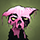 //images.fallenlondon.com/icons/catwetsmall.png - Apparently, someone adores you so fiercely that they've attempted to paint a cat pink in your name. Or it's an unusually devious practical joke.